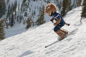 skiing bobcat.jpg